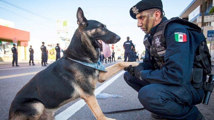 FOTOS: Policía enternece a todo Facebook al consolar a perrito abandonado