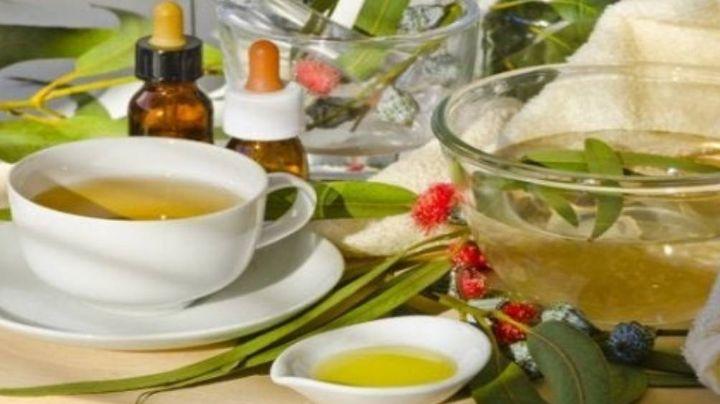 Receta para prepara té de eucalipto, jengibre y limón, para combatir los resfriados