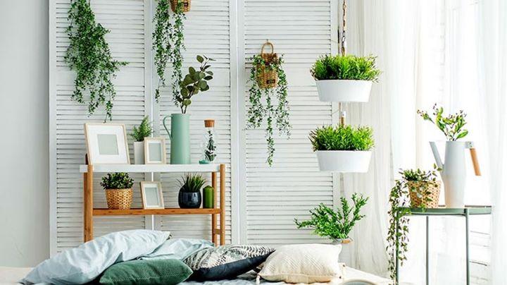 Además de decorar tu hogar, estas bonitas plantas podrían ayudarte a atraer fortuna