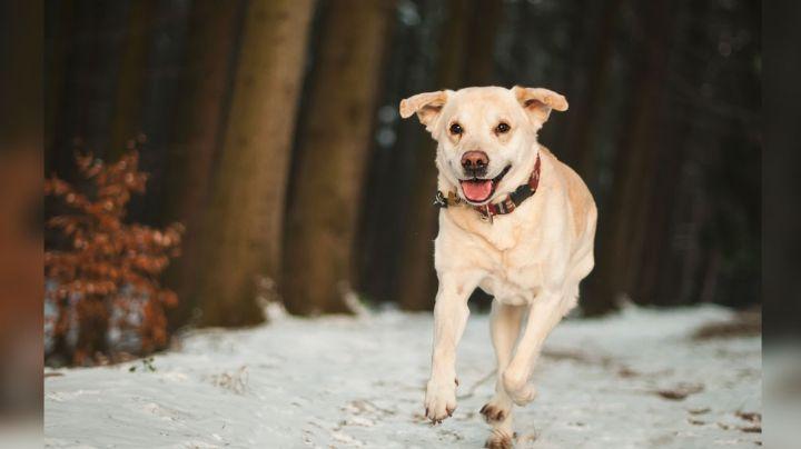 ¿Buscas entender los ladridos de tus perros? Este collar es una excelente opción