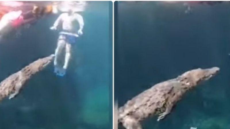 ¡Sorprendente! Cocodrilo nada al lado de turistas en cenote de Tulum, Quintana Roo: VIDEO