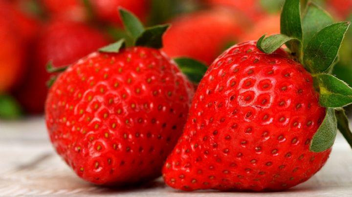 ¡Hay insectos en tus fresas! Los científicos determinan qué tan saludable es consumir esta fruta