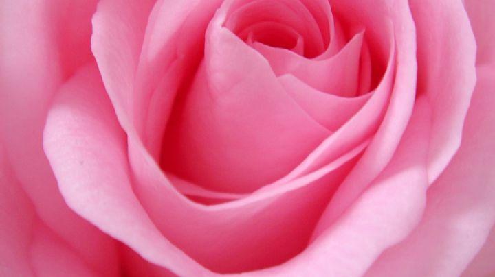 ¡Aprende a hacerlo! Este tónico de agua de rosas casero dejará tu piel suave y bella