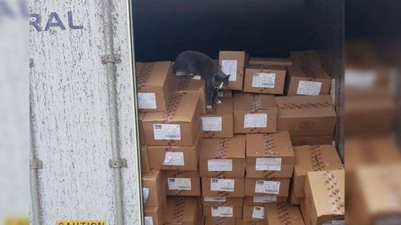 FOTOS: Gatito sobrevive comiendo bombones tras estar atrapado semanas en un contenedor