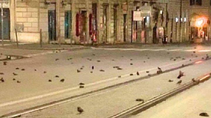 En Roma, cientos de aves pierden la vida a causa de los fuegos artificiales del Año Nuevo