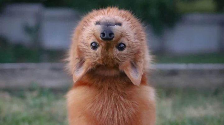 Kiko: La perrita que sorprendió a todo Internet con su particular habilidad