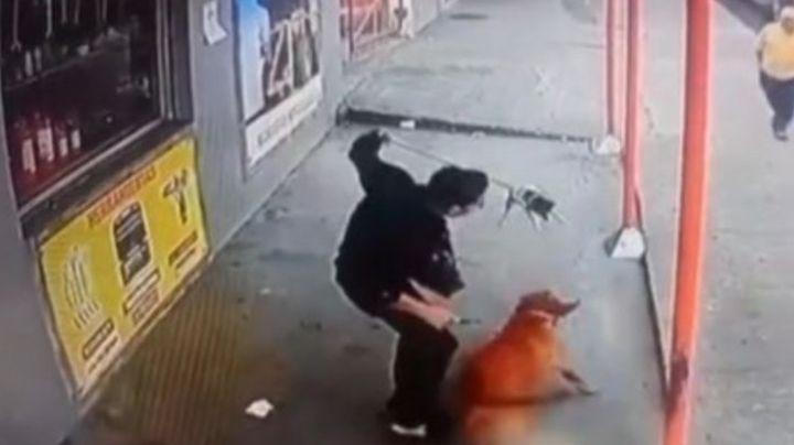 VIDEO: Perrito vuela como un papalote; su dueño evita que sea mordido por otro perro