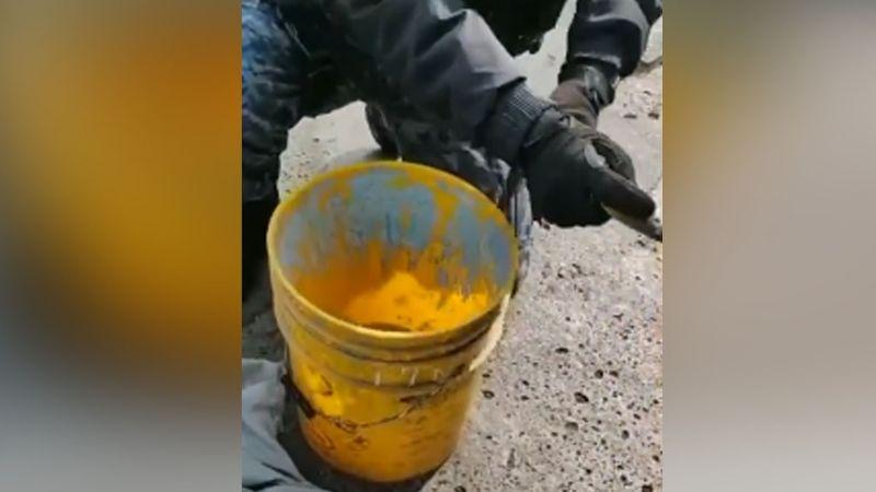 VIDEO: Autoridades ponen a salvo a un cocodrilo que deambulaba por calles de la CDMX
