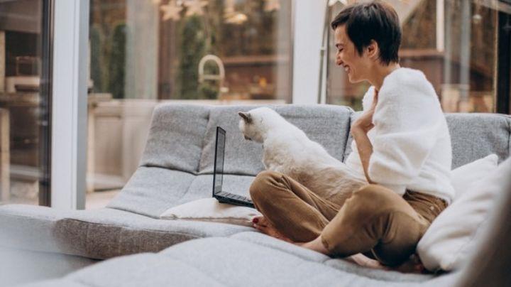 ¿Tu gato te hace compañía mientras trabajas? Entérate por qué estos animalitos tienen interés por las computadoras