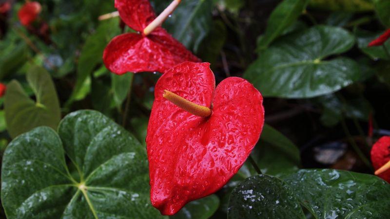 Flores y otras plantas que podrían ayudarte a oxigenar el aire de tu casa de forma natural