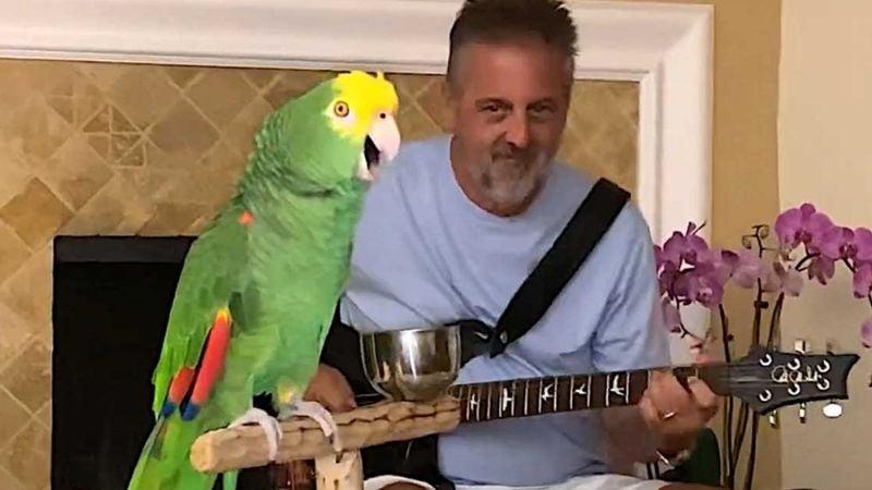 VIDEO VIRAL: ¡Increíble! Loro canta canciones de 'The Beatles' y más artistas de rock