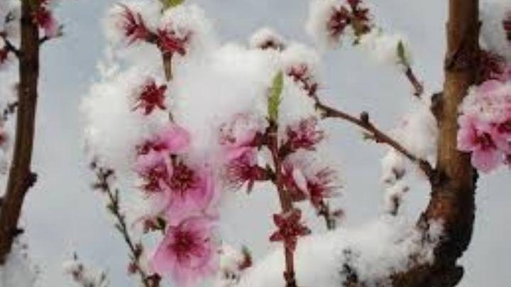 ¡No solo es la nochebuena! Estas son algunas de las flores de invierno más famosas