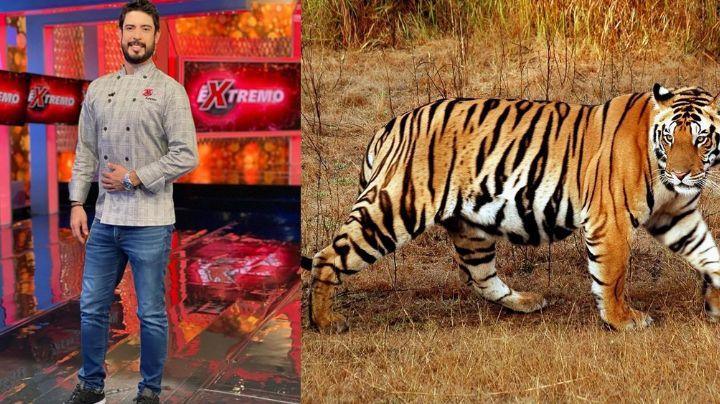 Experiencia 'Al Extremo': Conductor de TV Azteca se ve cara a cara con gran tigre de bengala