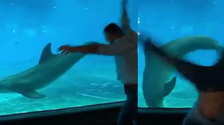 VIDEO: Delfín imita a un joven acróbata y realiza volteretas bajo el agua