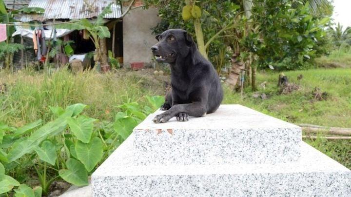A 2 años de su muerte, perrita no abandona la tumba de su amo, un niño que murió ahogado