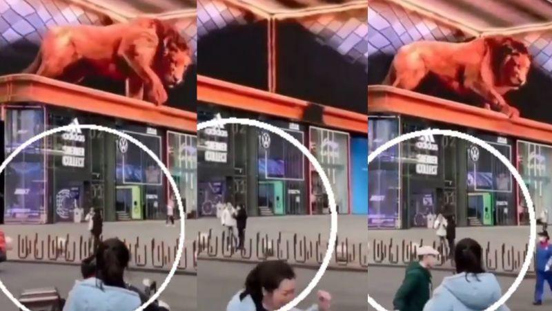 Terrible susto: Mujer sale huyendo aterrada al tener de frente a gran león