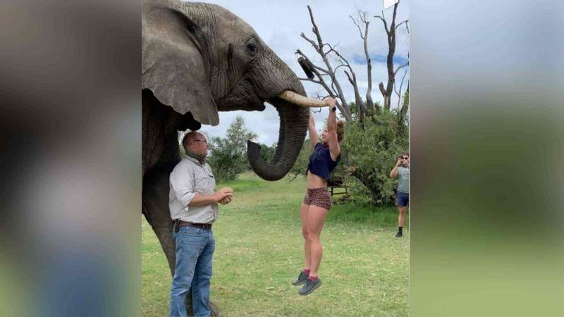 FOTO: Mujer fitness se cuelga en los colmillos de un elefante para hacer ejercicio
