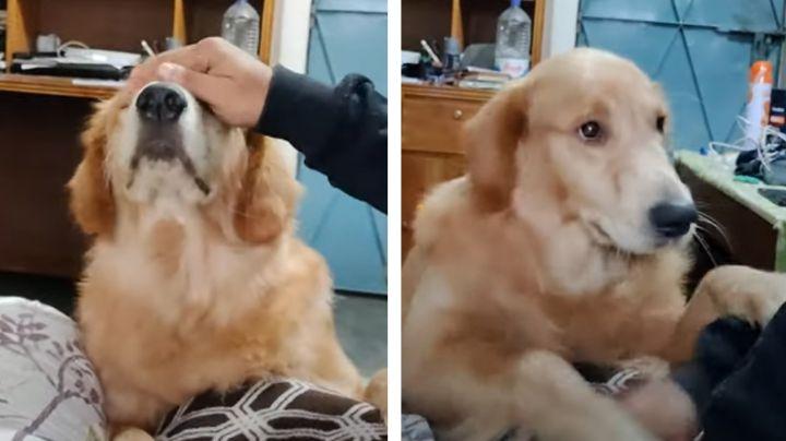 VIDEO: Perro enternece las redes por su peculiar manera de pedir más caricias