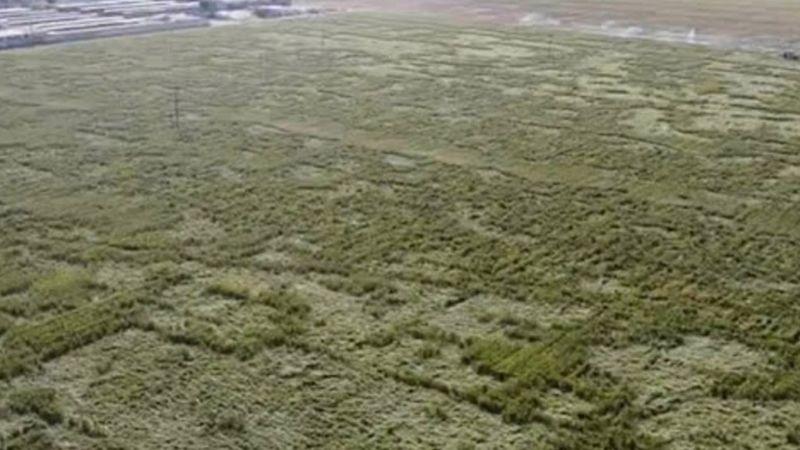 ¿Visita de extraterrestres? Captan extrañas figuras en tierras de cultivo de Edomex
