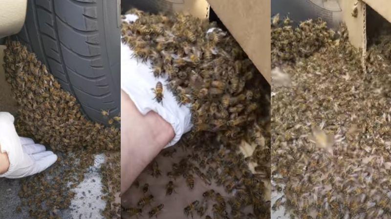 VIDEO: Hombre se arriesga y remueve a toda una enjambre de abejas de un neumático