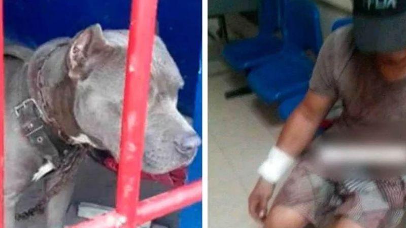 Perro acaba tras las rejas en Chiapas tras morder a más de una persona