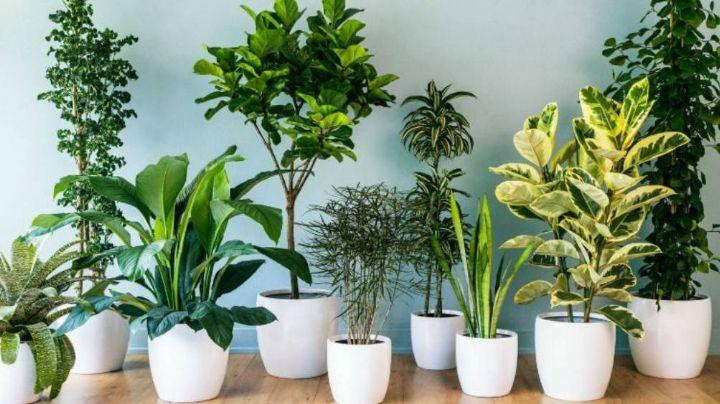 Plantas que se pueden tener dentro de casa para darle vida y buenas vibras a tu hogar