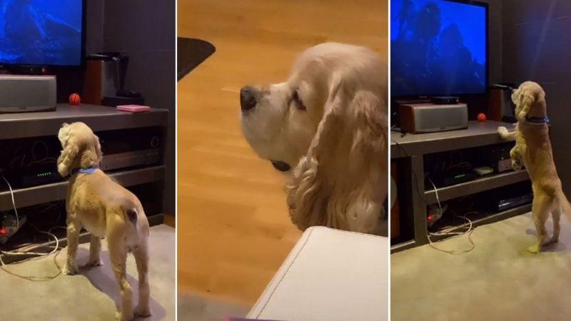VIDEO: Perro endulza redes sociales al estallar de felicidad al ver Disney