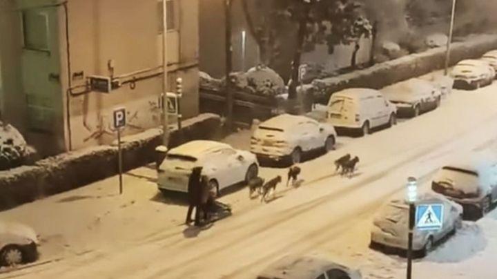 VIDEO: En plena tormenta de nieve, un hombre se pasea en un trineo jalado por perros