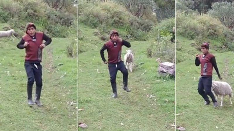 VIDEO: Oveja le roba el show a un joven que intentaba grabar un video de baile para TikTok