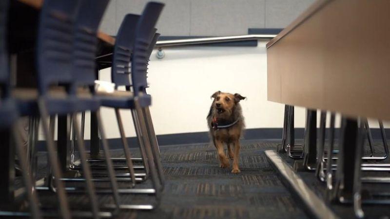 ¡Sorprendente! Universidad de Estados Unidos apuesta por perros para detectar coronavirus