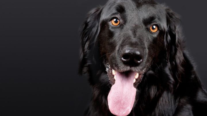 Quemado y herido: Cachorro víctima de lesiones graves se convierte en perro de terapia