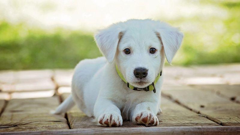 ¡Adiós 'el negro'! Descubre algunos nombres inspirados en la mitología griega para perros