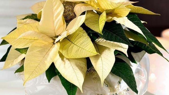 ¡Impactante! Estas son algunas especies de flores mexicanas que quizás no conocías