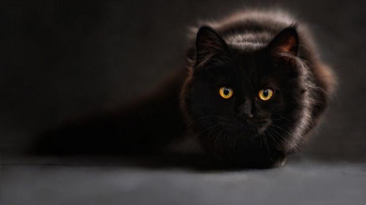 ¡Tan misteriosos como hermosos! Descubre los mitos que giran entorno a los gatos