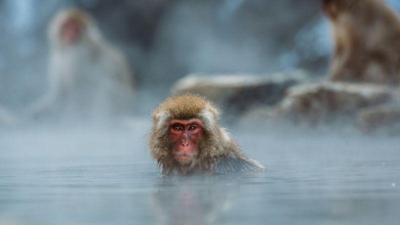 Hallan muerta a una bebé de 8 días de nacida; la raptó un grupo de monos en su vivienda
