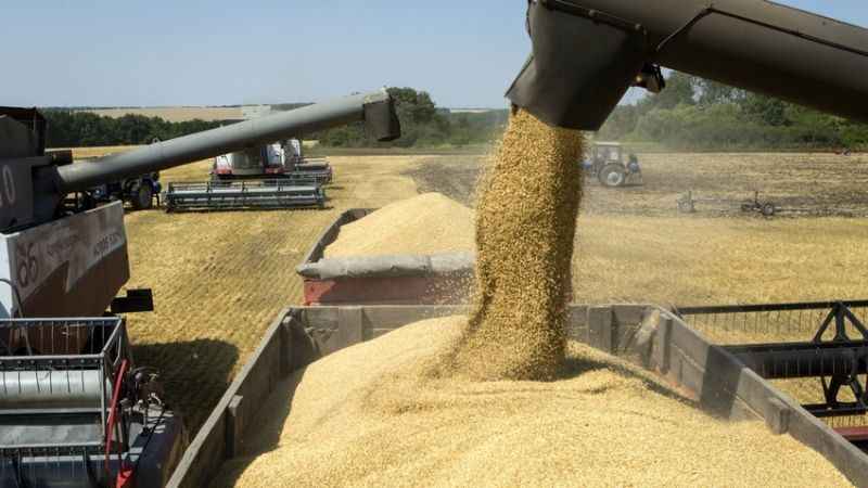 Semilla pirata provoca pérdidas millonarias a la agricultura