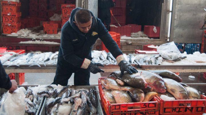 Sader y Conapesca garantizan abasto de peces y mariscos para cuaresma