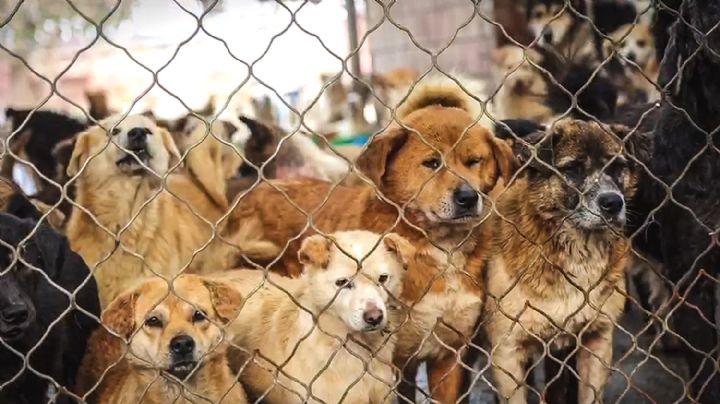 ¡Impactante historia! Organización rescata a más de 100 perros de la industria alimenticia