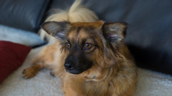 'Me salvó la vida': Esta es la historia de un perro que permaneció con su dueño herido