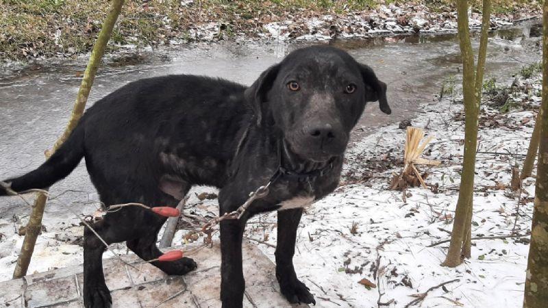 ¡Justicia! Caen por crueldad animal quienes exponen a sus mascotas en tormenta invernal