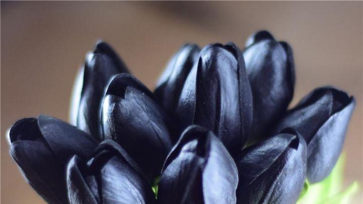 ¡Obscuras como la noche! Las flores negras existen y pueden ser perfectas para tu hogar