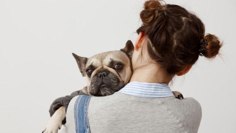¿Tu perro no va al baño? Estos fáciles remedios te ayudarán a aliviar su estreñimiento