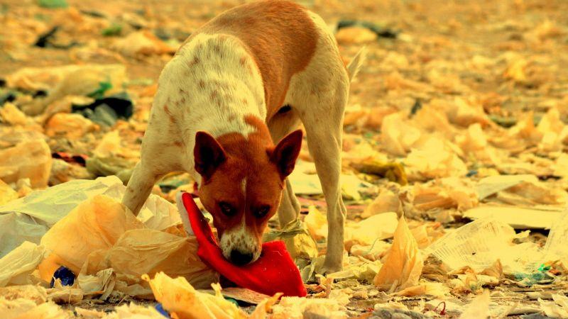 Terror en Edomex: Perros hallan restos humanos detrás de un kínder de Toluca