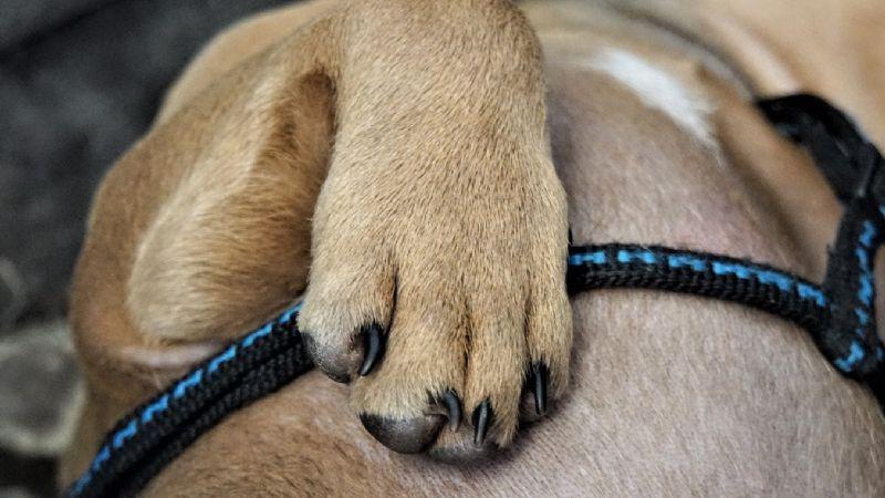 Alerta en Navolato: Presunto asesino serial de perros ha cobrado casi 100 vidas