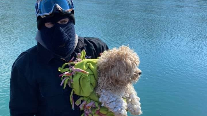 ¡Impactante historia! Este cachorro estuvo atrapado 4 días en un río de aguas heladas