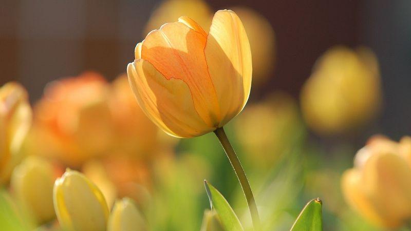 ¡Llegará en marzo! Averigua algunos datos curiosos del equinoccio de primavera