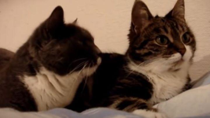 ¡Impactantes mascotas! Conoce a los gatos más famosos de todo YouTube