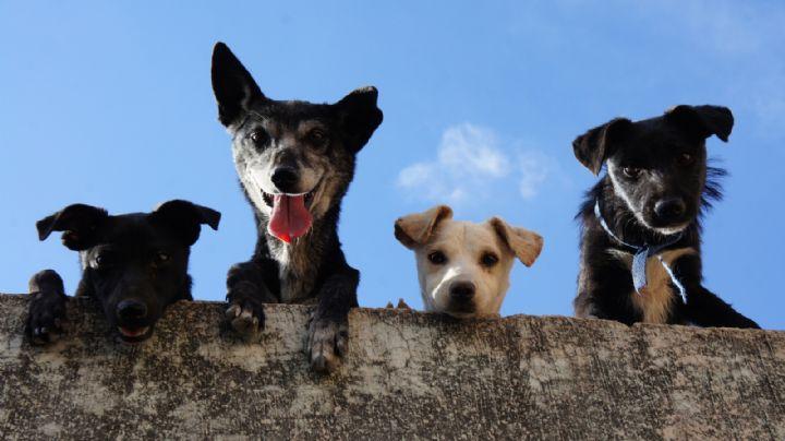 VIDEO: Entre lágrimas, mujer denuncia envenenamiento masivo de perros; su mascota murió