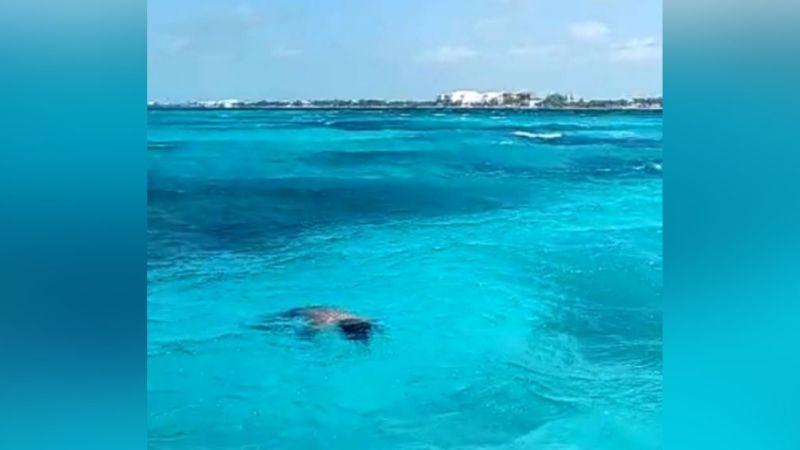 Pescadores hallan el cadáver de un hombre al flotar en las aguas de Cancún