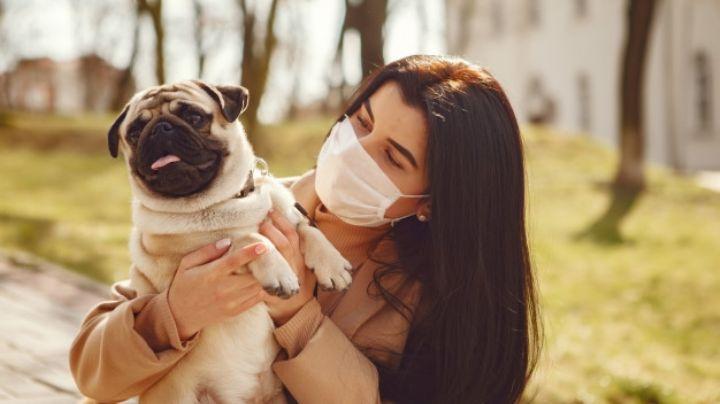 ¡No los abandones! El Locatel pide cuidar a mascotas en tiempos de coronavirus